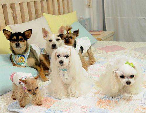 """那么我们是不是应该动手制作""""爱心牌""""狗狗服装呢?"""