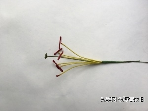 把六根雄蕊和一根雌蕊组合在一起,雌蕊比雄蕊高约1cm。