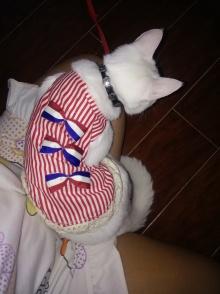 猫主人的新衣